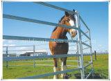 Steel Horse Paddock Fence/ Yards Panel Wholesale