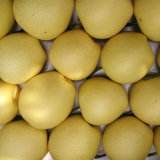 Good Quality of Fresh Crown Pear