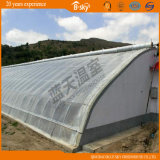 High Production Film Solar Green House for Vegetable Planting