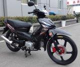 Brand New Cub Motorcycle 110cc, 120cc, 125cc
