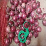 2016 Fresh Onions Seller in China