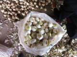 2017 New Crop Garlic Low Price and Good Quality