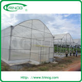 Vegetables Tunnel Film Greenhouse for commercial