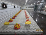Broiler Coop and Chicken House with Full Set Equipment