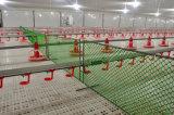 Poultry Farm Design for Broiler Breeder Chicken