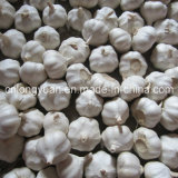 2017 New Crop Fresh Garlic with Carton Packing