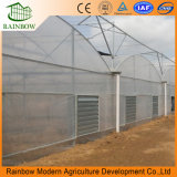Low Cost Agricultural Tomato 48 X 100 Multi-Span Agricultrual Greenhouse for Sale