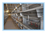 Automatic Small Chick Pullet Cage System for Poultry Farmer (H Type Frame)