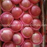 New Harvest Good Quality of Fresh Qinguan Apple