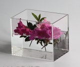 Mini Size of Acrylic Clear Fish Tank for Home Decoration
