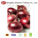 Fresh Purple Onion with Top Quality