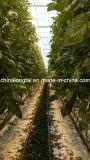 4000d Best Tenacity Plastic Twisted Rope/Tomato Twine (SGS)