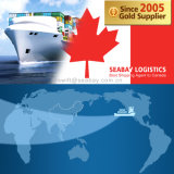 Competitive Ocean / Sea Freight to Halifax From China/Tianjin/Qingdao/Shanghai/Ningbo/Xiamen/Shenzhen/Guangzhou