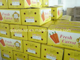 10kg Carton Fresh Carrot (150-200G)