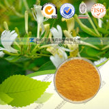 Natural Chlorogenic Acid 50% Honeysuchle Flowers Extract