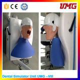 Medical Teaching Equipment High Quality Dental Teaching Model