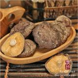Dried Mushroom Black Surface (Thin)
