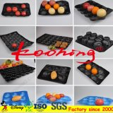 PP/PVC/PS Black Fruit Packaging Shed/Transparent Fruit Packing Tray for Apple Kiwi.