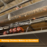 Full-automatic Poultry Battery Layer Cage System for Closed Poultry Farm