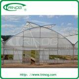 Trinog Plastic greenhouse