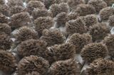 100% Natural Maitake Mushroom Extract Powder