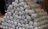 Top Quality White Garlic with Mesh Bag
