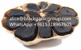 Enjoy Oneself to Forget to Leave for Black Garlic