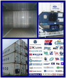 Reefer Container Consolidateshipping Service From China to South America
