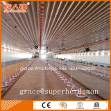Industrial Broiler Poultry Farm Chicken House From Factory
