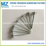 Hot Sales E. G. Galvanised Plain Shank Umbrella Roofing Nail