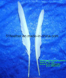 Big-Broad Duck Feather for Making Feather Crafts