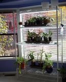 Metal Chrome DIY Plant Growing Shelving for Geen House