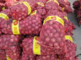 Top Quality Red Onion for Exporting