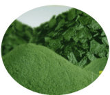 100% Natural Spirulina Powder/Chlorella Powder (Protein 60.0%)