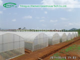 Economical Tunnel Plastic Greenhouse for Vegetable