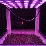 Ce RoHS FCC Approved LED Light for Seeding