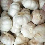 2017 Dry Garlic Granules Dehydrated Natural Garlic