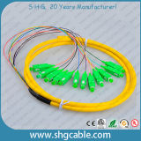 12 Core Sc/APC Sm Bunchy Fiber Optical Pigtail