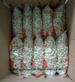New Crop Seaflower Roasted Peanut in Shell