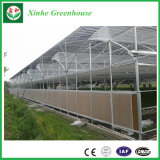 Manufacturer Agriculture Multi Span Polycarbonate Greenhouse PC Sheet Greenhouse