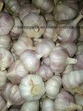 Fresh Chinese Normal White Garlic