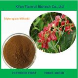 Natural Extract of Tripterygium Wilfordii for Sale