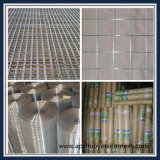 Galvanized Steel Welded Wire Mesh Panel or in Roll