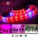 5050SMD LED Strip Plant Growlight Light with UL Driver for Grow Lighting