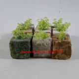 Small Irregular Shpae Natural Stone Flower Pots and Planter for Indoor and Outdoor