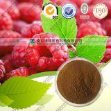Natural Raspberry Extract Raspberry Ketone