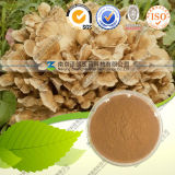 Natural Maitake Extract with Polysaccharides 10%-50%