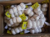 Chinese Pure White Garlic with Small Packing
