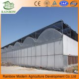 Multi Span Agricultural Plastic Film Greenhouse for Sale