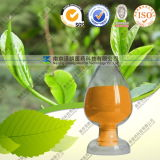 Green Tea Extract Powder EGCG Catechins 1% to 98%